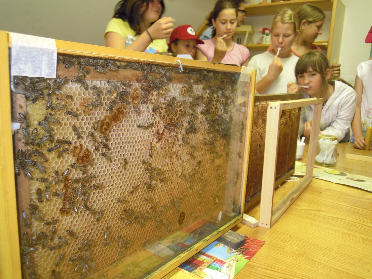 Čebelarska delavnica