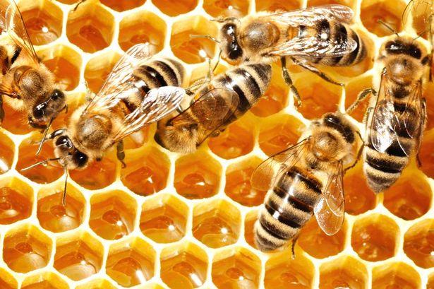 Miel-de-abeja-Manuka